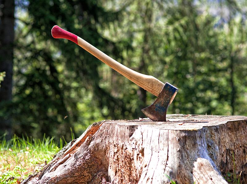 Besoin d'abattre des arbres ? Pensez Greenrod - élagage - taille et coup d'arbres et de haies, entretien de jardins