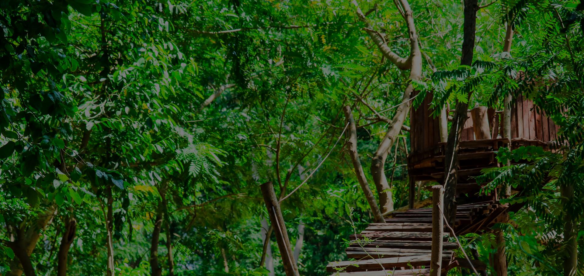 Greenrod construit vos cabanes dans les arbres