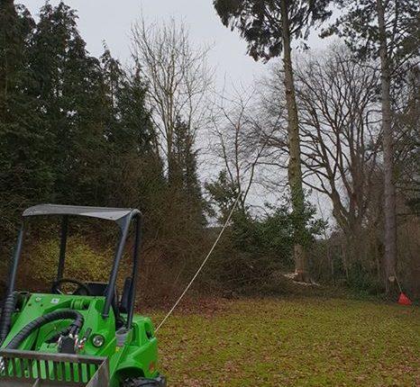 Abattage d'arbre par Greenrod - votre partenaire multi-services